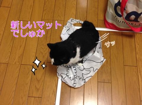 猫エコバッグの上に座る