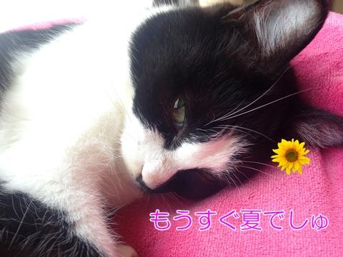 猫ベッドまったり