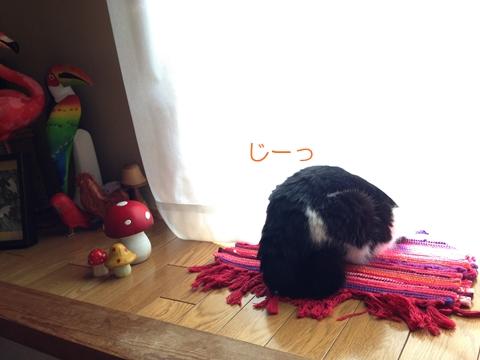 猫窓の外偵察