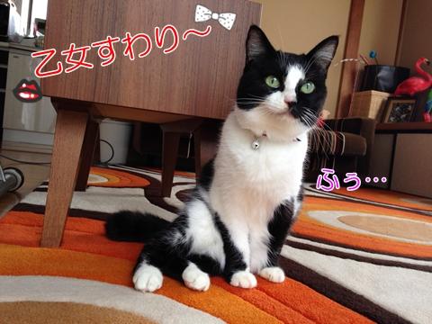 猫変わった座り方乙女