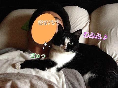 猫ベッド一緒に寝る