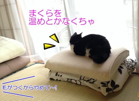 まくらに乗る猫