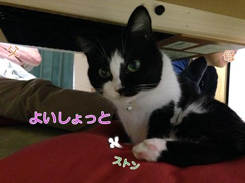 机の下でくつろぐ猫