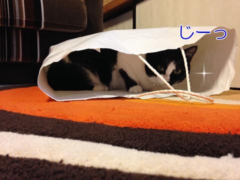 猫紙袋入る