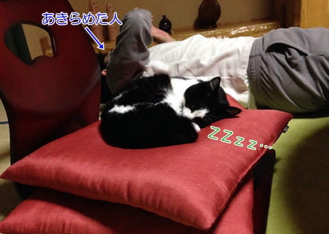 猫に椅子を取られる