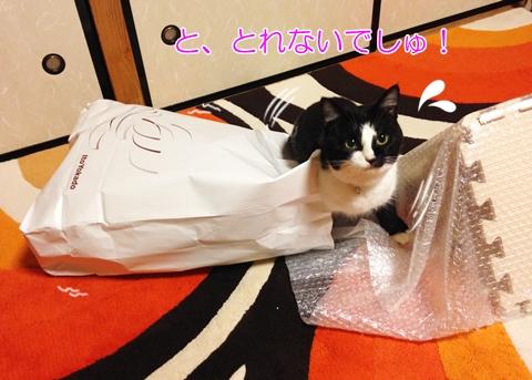 猫紙袋持ち手にひっかかる