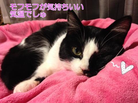 猫ベッドモフモフ
