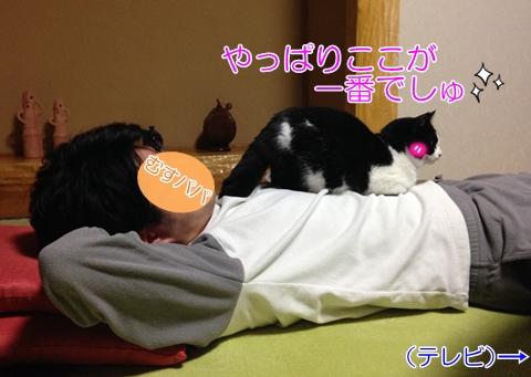 猫お腹の上に座る