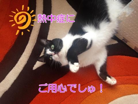 猫熱中症注意