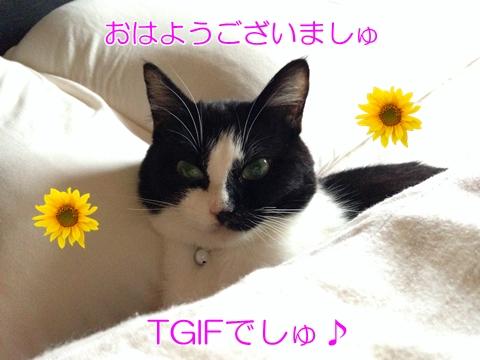 猫ベッドTGIF