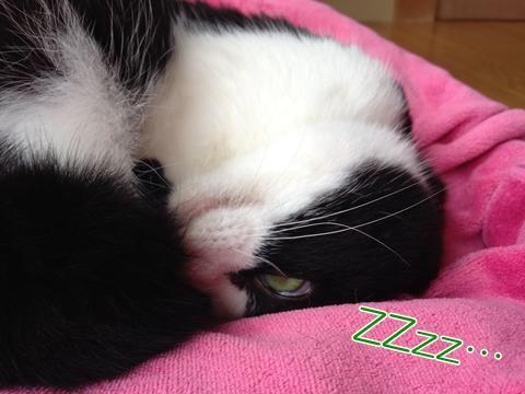 猫目を開けて寝る