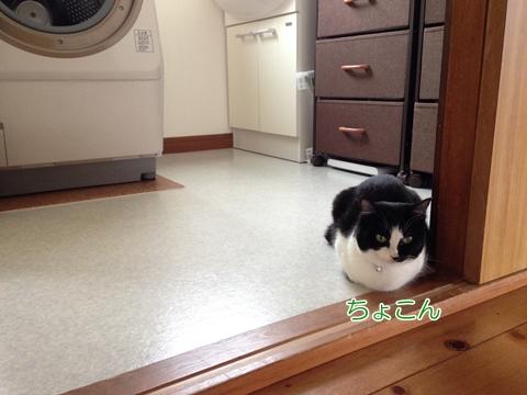 猫は床に座らない?何かの上に乗るムスビ