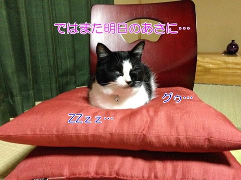 猫座布団で寝る