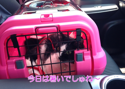 猫お出かけ車