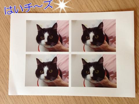 猫証明写真病院