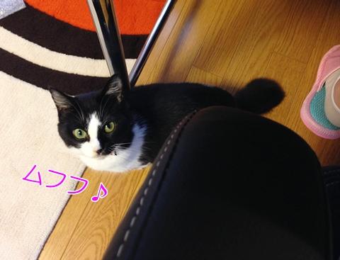 猫鳴き声小さいかすれるサイレント