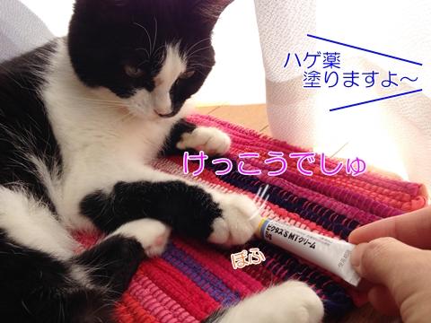 猫ムスビ、3種ワクチン&フロントライン♪意外にかかる費用