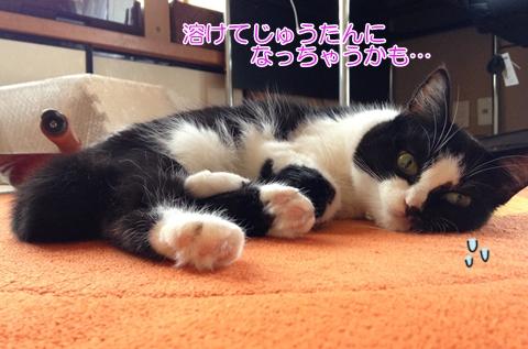 猫絨毯床伸びる