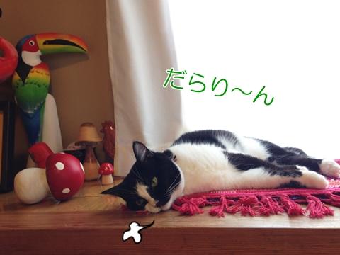 猫暑さ平気対策