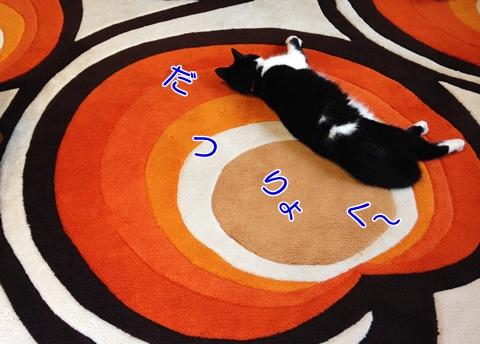 猫暑さ平気保冷剤対策