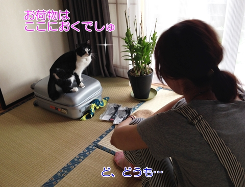 猫キャリーバッグ乗る