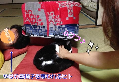 猫座椅子奪われる