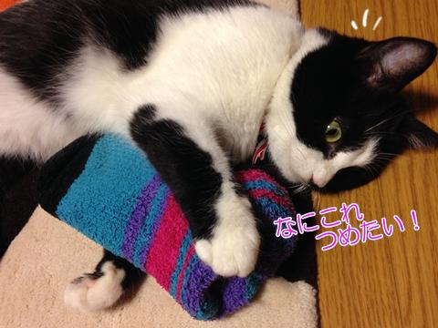 猫は暑いのは平気?急な暑さ対策に保冷剤やペットボトル