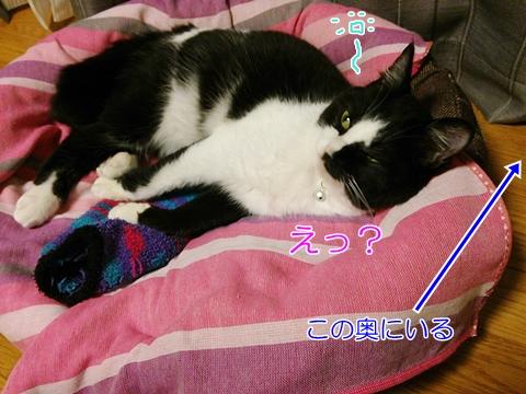 猫ゴキブリ退治ゴキジェット影響