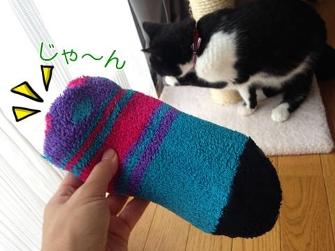 猫暑さ対策平気保冷剤