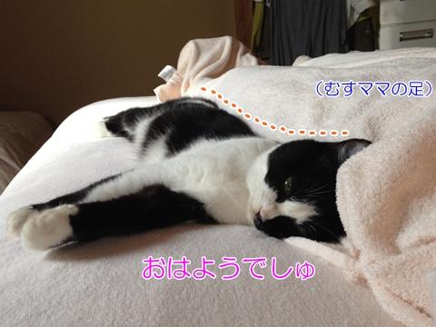 猫添い寝ベッド