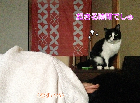 猫朝起こす時間
