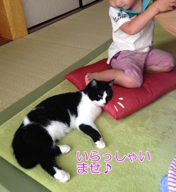 猫は子供が嫌い?