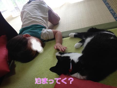 猫子供嫌い苦手
