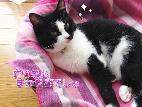 猫ゴキブリ駆除ゴキジェット影響