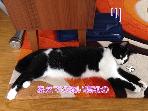 猫ペットひんやりジェルマット夏