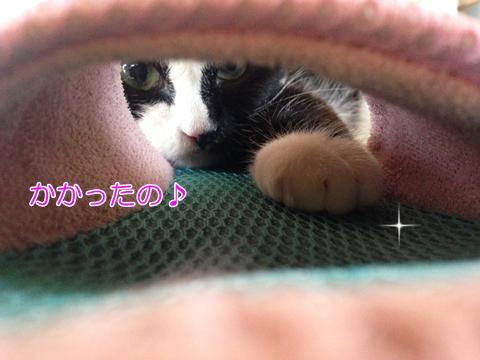 猫スリッパ噛む好き