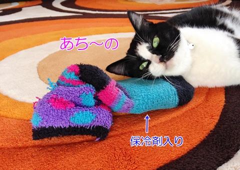 猫保冷剤夏の暑さ対策