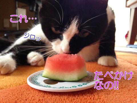 猫スイカ大丈夫味覚甘み