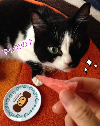 猫はスイカを食べて大丈夫?味覚は甘さを感じにくい?