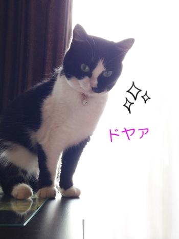 猫めがね落とすいたずらドヤ顔
