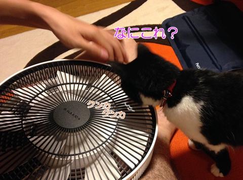 猫扇風機好き危険