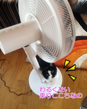 猫扇風機好き?危険?