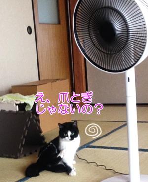 猫は扇風機がお好き?危ない?