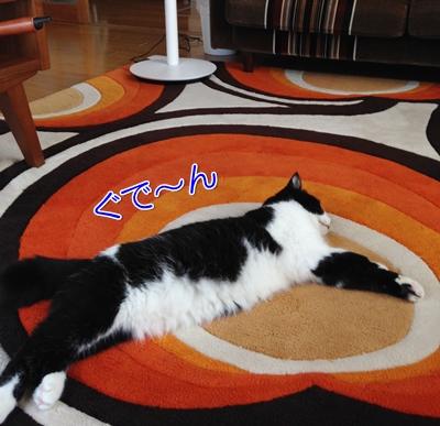 猫絨毯寝る