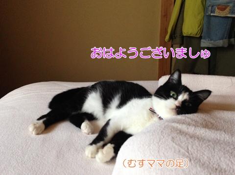 猫朝起こす足枕
