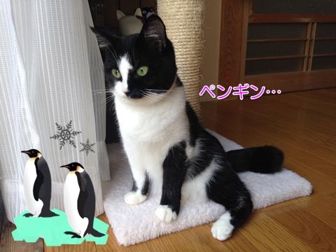 ペンギン猫