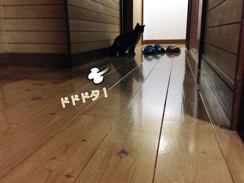 猫深夜走り回る獲物