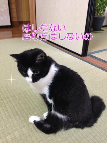 猫ムスビの変わった座り方、スコ座りならぬ…