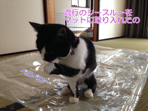 猫ビニール袋上に座る