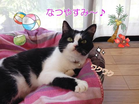 猫の夏休み